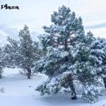 hotel plaza nieve09
