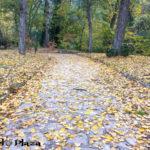 otoño cuenca03